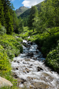 One of the many streams along an Alpine trail.